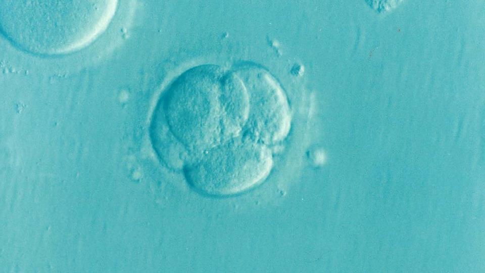 zarodek