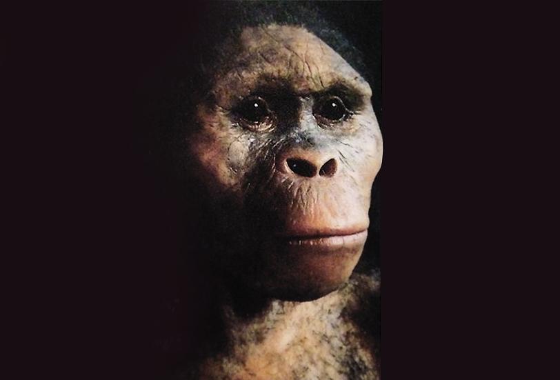 australopitek