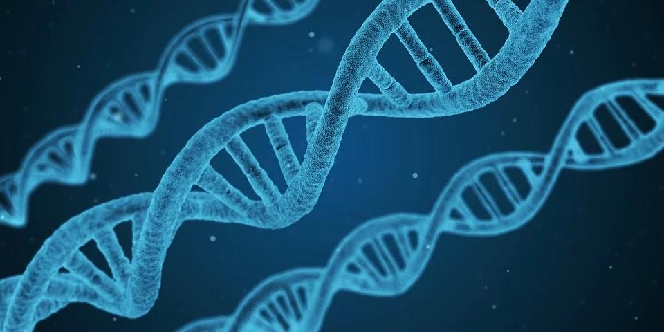 DNA kod genetyczny