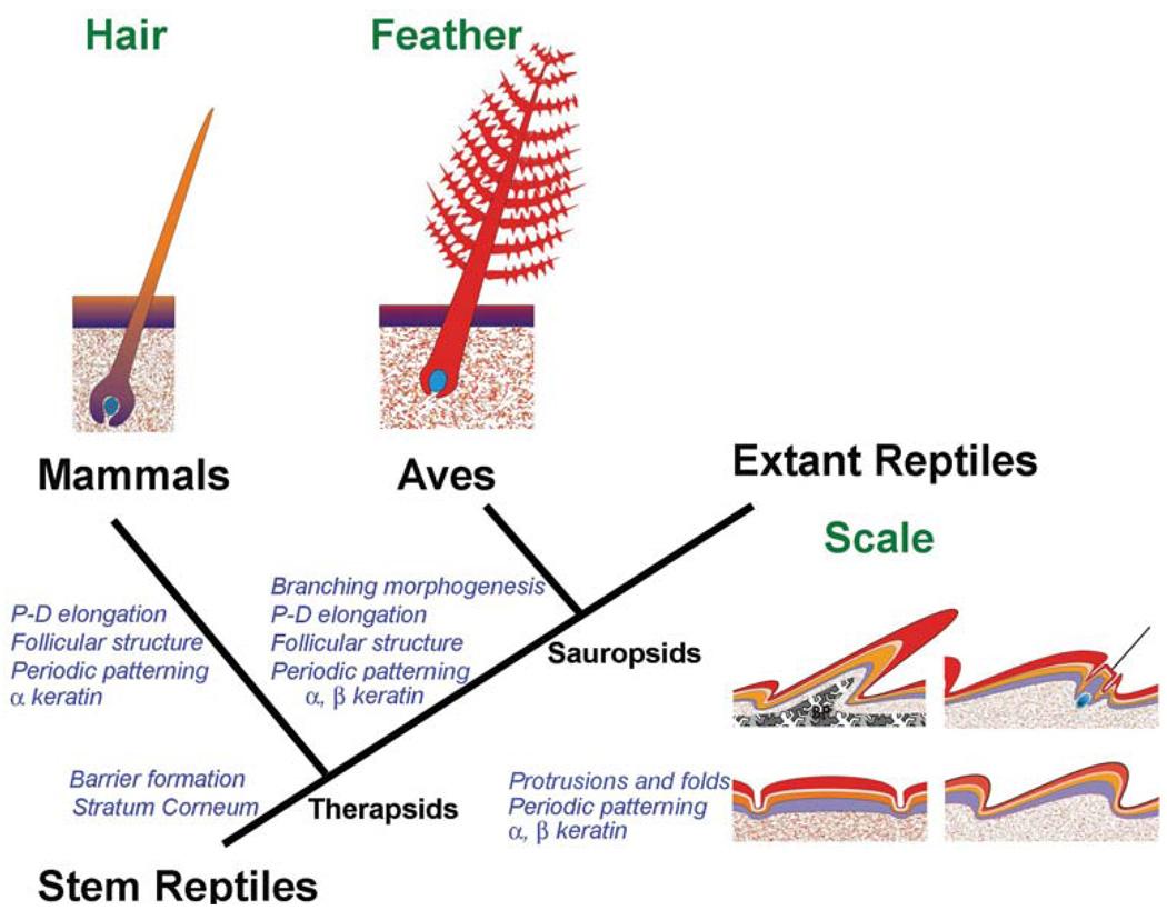 ewolucja włosów