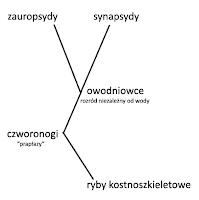 ewolucja synapsydów