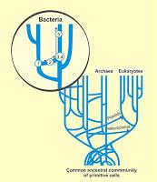 horyzontalny transfer genów