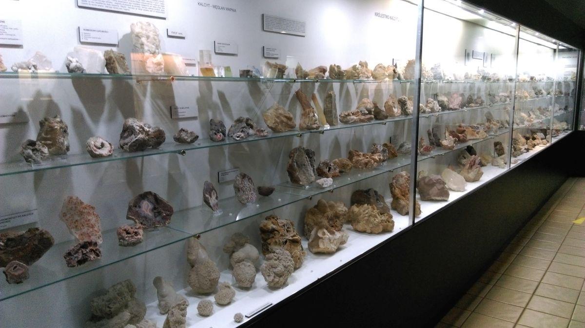 Muzeum Ewolucji Kraków