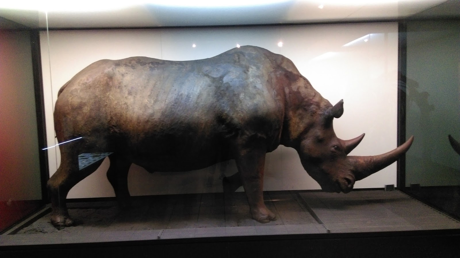 Muzeum systematyki i ewolucji ssaków kraków