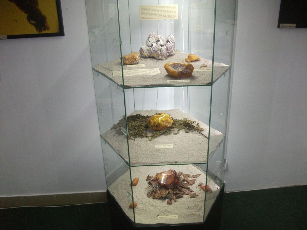 Muzeum Przyrodnicze Kraków