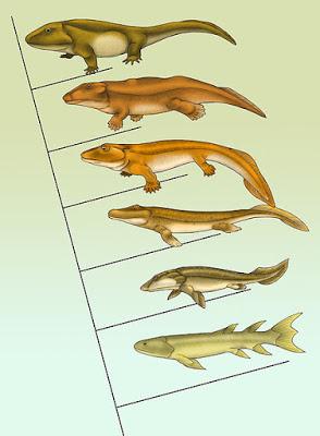 ewolucja czworonogów