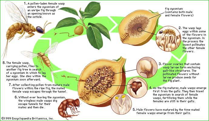 bleskotki figi