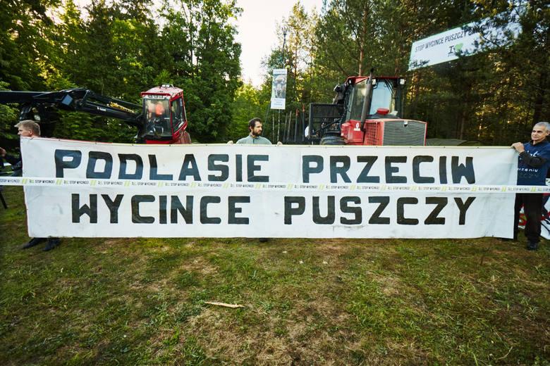 wycinka Puszczy Białowieskiej