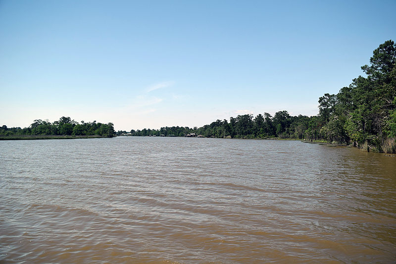 Fish River salamandra USA