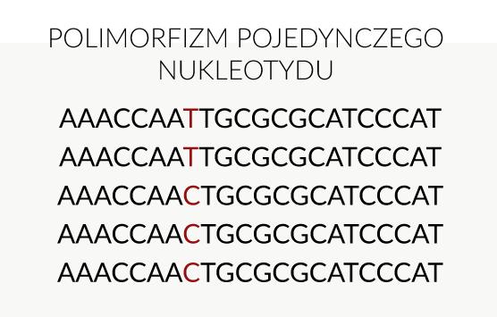 polimorfizm DNA