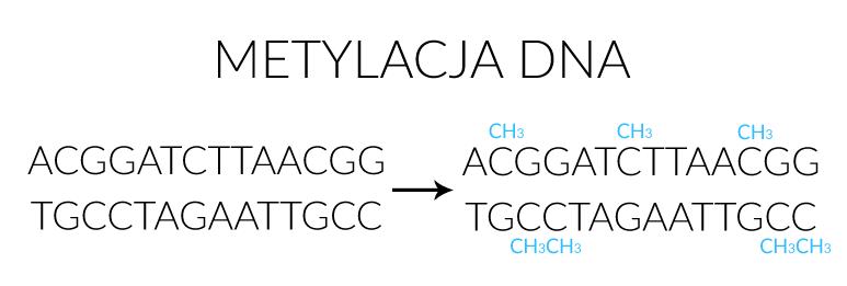 Metylacja DNA