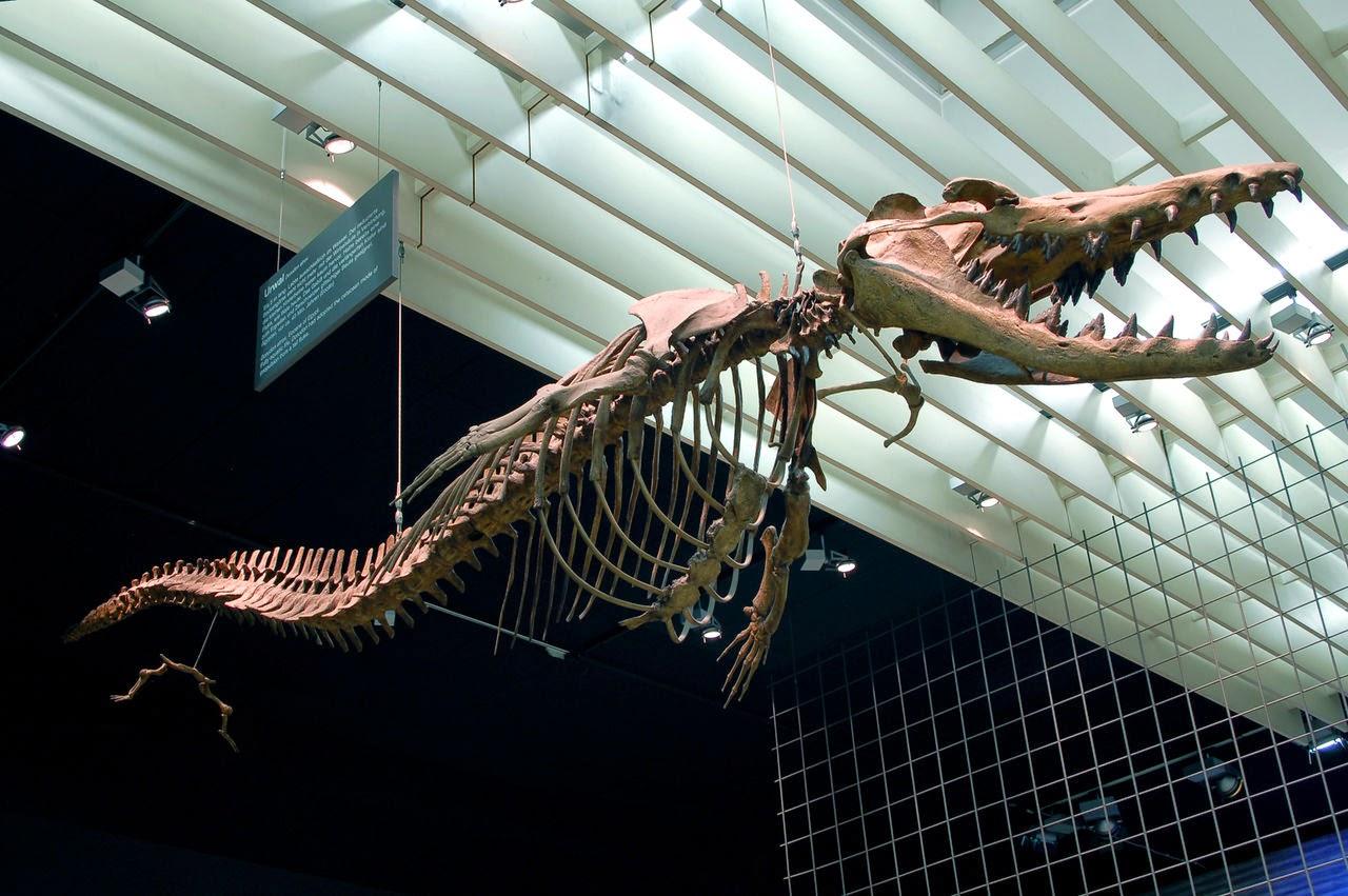 dorudon szkielet