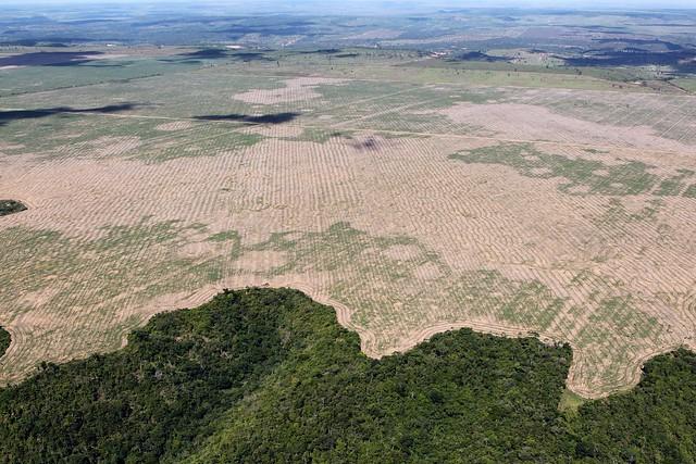 Amazonia wylesianie