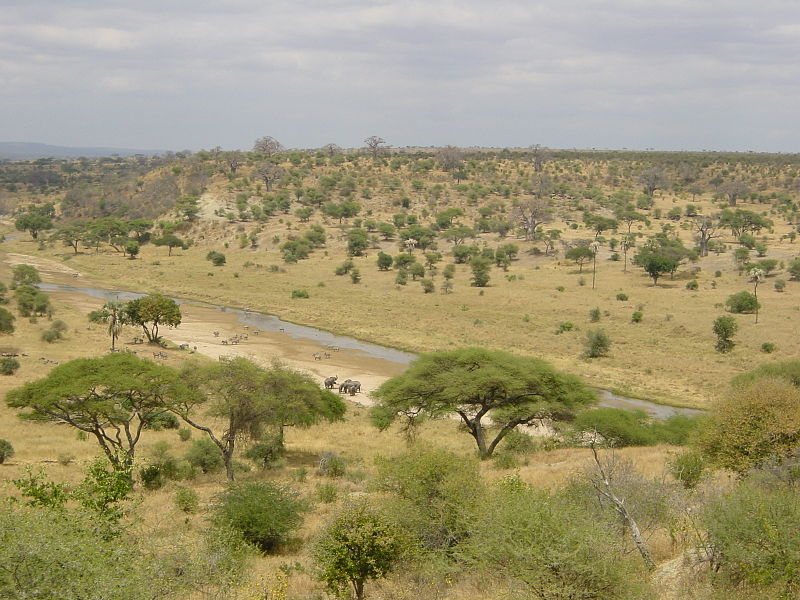 Sawanna bioróżnorodność