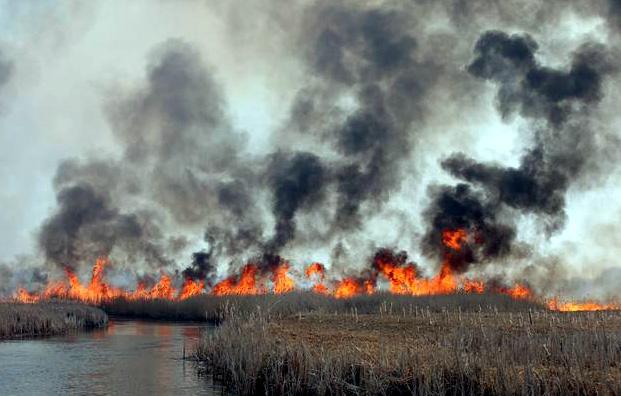 Biebrzański Park Narodowy pożar