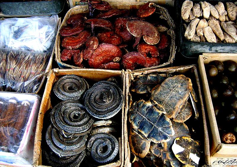surowce tradycyjnej medycyny chińskiej